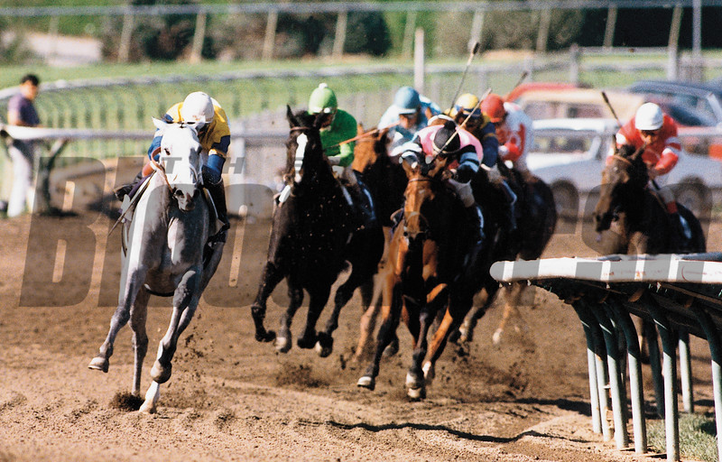 Lady's Secret turns for home in the 1986 Distaff on her way to an easy victory and Horse of the Year honors, photo by Skip Dickstein