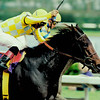Beautiful Pleasure wins the 1999 Breeders' Cup Distaff at Gulfstream Park<br /> Skip Dickstein Photo