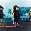 Sunday Silence wins the 1989 Breeders' Cup Classic over Easy Goer (left) and Blushing John (right).<br /> Skip Dickstein Photo