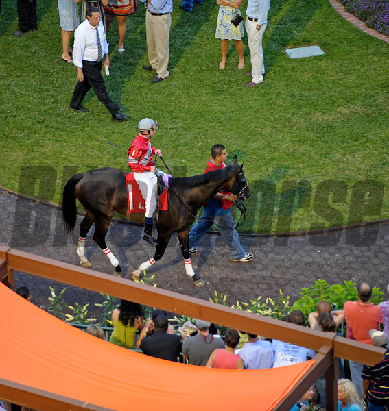 Caption: Jedi Code with Calvin Borel in the paddock before winning the 7th race, a mile on dirt.<br /> Night racing at Churchill Downs, where it was Disco theme night, on Friday, June 11, 2010, in Louisville, Ky.<br /> Origs3 image116<br /> Photo by Anne M. Eberhardt