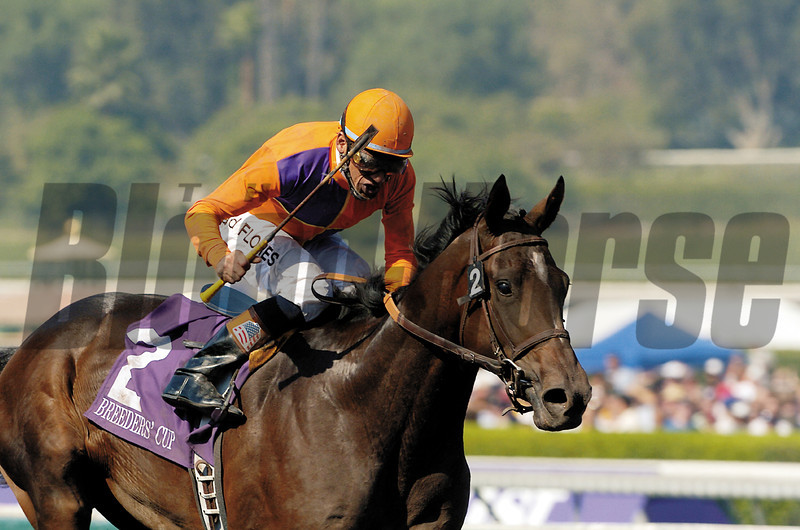Action This Day wins the 2003 Breeders' Cup Juvenile.<br /> Mike Corrado Photo