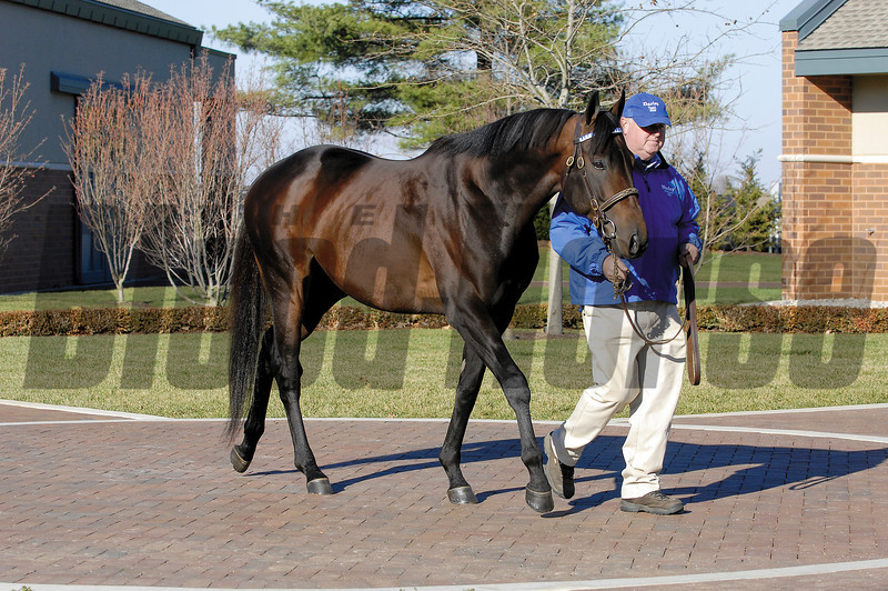Bernardini<br /> Darley at Jonabell on Dec. 4, 2006, in Lexington, KY<br /> Photo by Anne M. Eberhardt