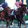 Tiznow in the 2001 Breeders' Cup Classic, photo by Skip Dickstein