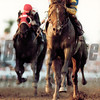 A.P. Indy winning 1992 Breeders' Cup<br /> Skip Dickstein Photo
