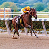 Preach and jockey Julie Krone win the Frizette Stakes at Belmont Park on October 12, 1991