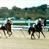 Twilight Ridge and Family Style running at the 1985 Breeders' Cup.<br /> Skip Dickstein Photo
