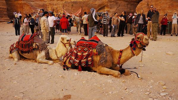 Petra - -1020187