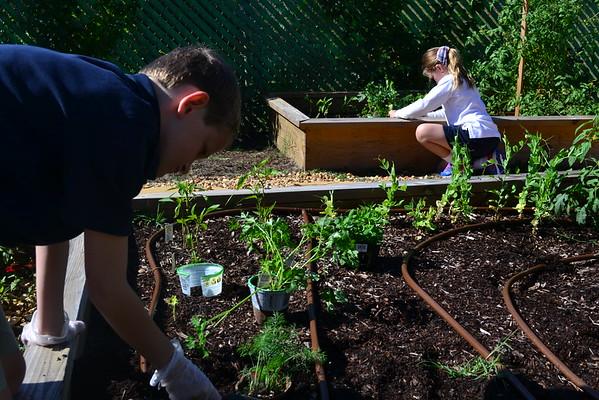 3rd Grade Gardening 2016