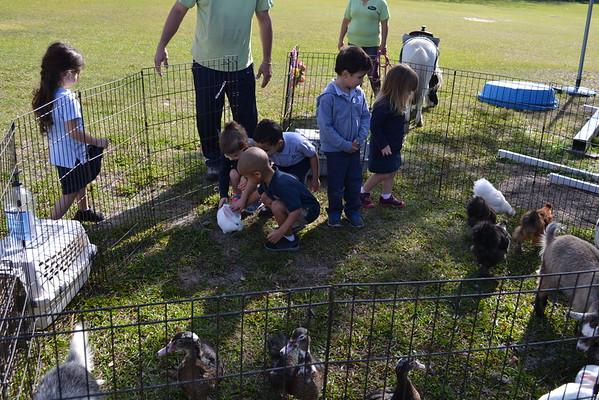Farm Animals Visit PreK3 2016