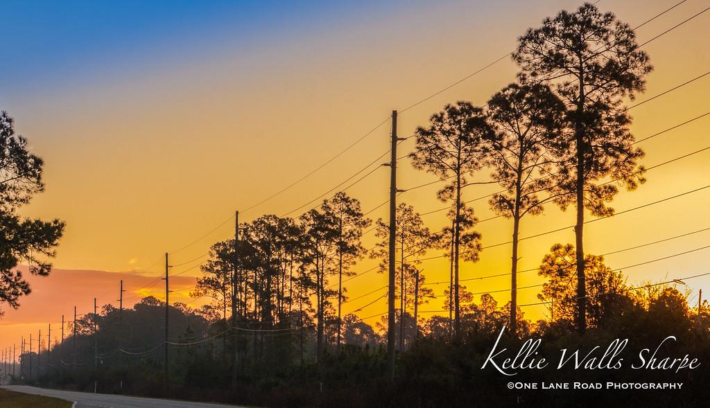 Sunrise Over The Swamp