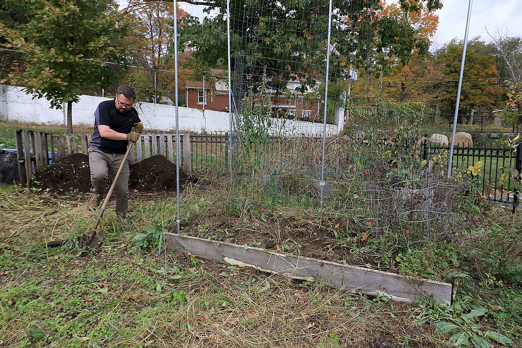. Gardeners & volunteers cleaned up the Gateway Park Community Gardens in Fitchburg on Saturday, October 20, 2018. They pulled weeds racked the area and fixed the walkway. they also had new wood to build new garden beds. The wood was gotten through the Gateway Park fund and with some help from Growing Places. The gardens Manager Josiah Richards pulls weeds as he works on fixing up the garden. SENTINEL & ENTERPRISE/JOHN LOVE