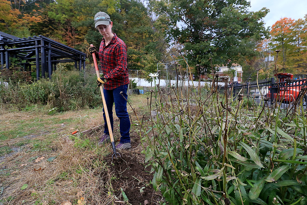 . Gardeners & volunteers cleaned up the Gateway Park Community Gardens in Fitchburg on Saturday, October 20, 2018. They pulled weeds racked the area and fixed the walkway. they also had new wood to build new garden beds. The wood was gotten through the Gateway Park fund and with some help from Growing Places. Helping with the cleanup was volunteer Janet Edwards. SENTINEL & ENTERPRISE/JOHN LOVE