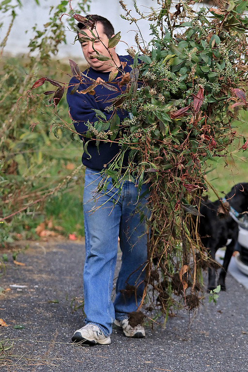 . Gardeners & volunteers cleaned up the Gateway Park Community Gardens in Fitchburg on Saturday, October 20, 2018. They pulled weeds racked the area and fixed the walkway. they also had new wood to build new garden beds. The wood was gotten through the Gateway Park fund and with some help from Growing Places. One of the volunteers was Joe Bowen. SENTINEL & ENTERPRISE/JOHN LOVE