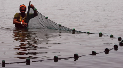 Seining for bait on the Hudson River.