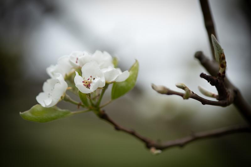 April_Landscaping00012