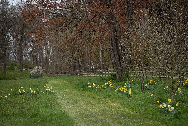 April_Landscaping00006