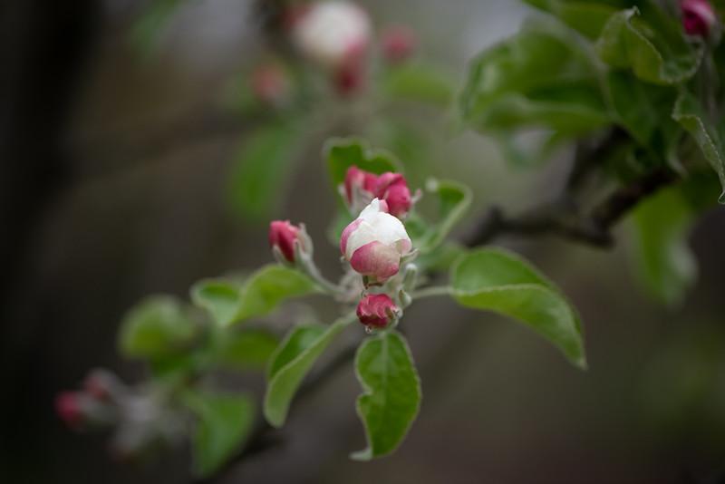 April_Landscaping00013