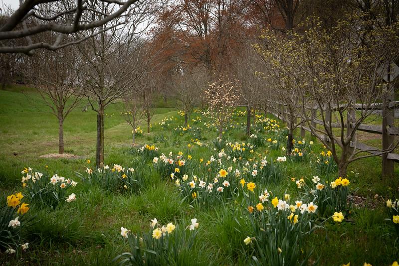 April_Landscaping00003