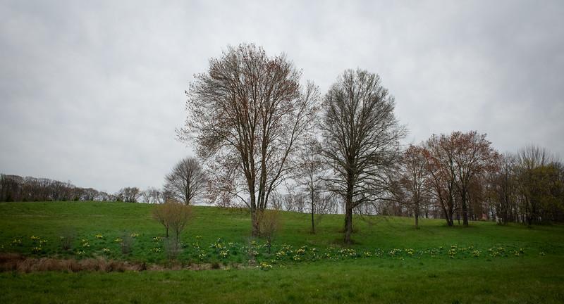 April_Landscaping00007