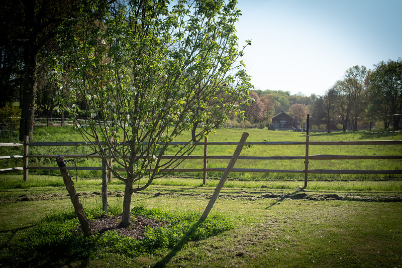 May2020_Landscaping00042