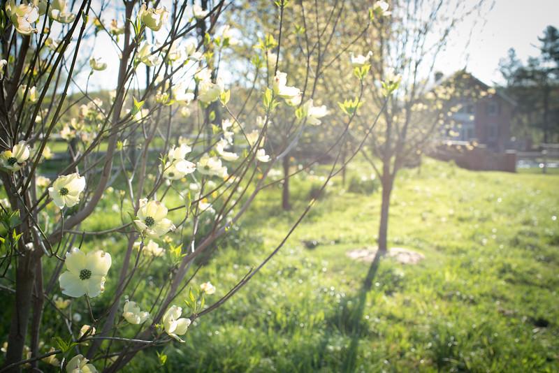 May2020_Landscaping00039