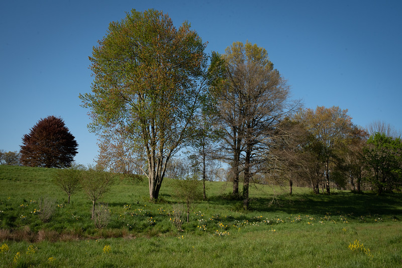 May2020_Landscaping00036
