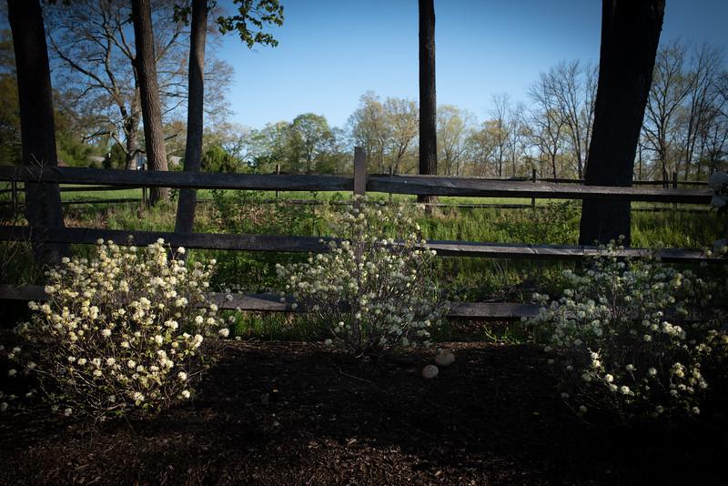 May2020_Landscaping00030