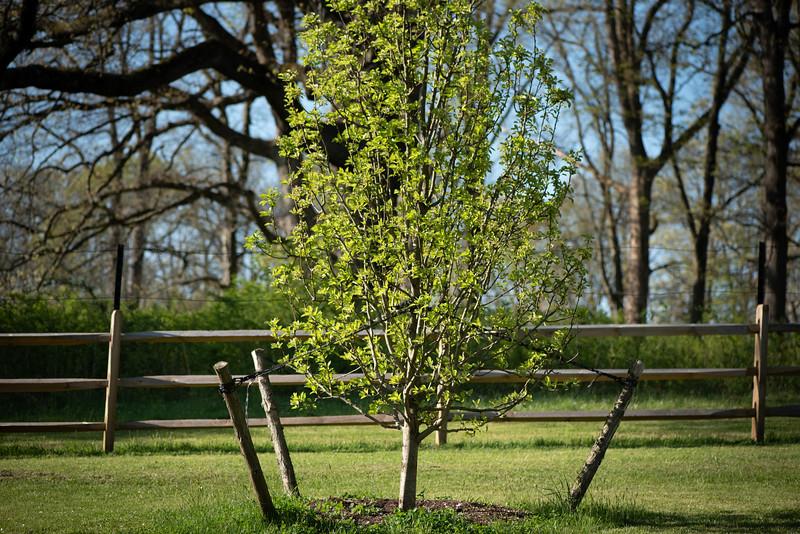 May2020_Landscaping00044