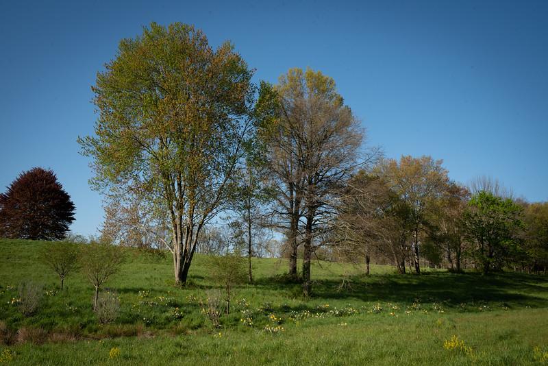 May2020_Landscaping00037