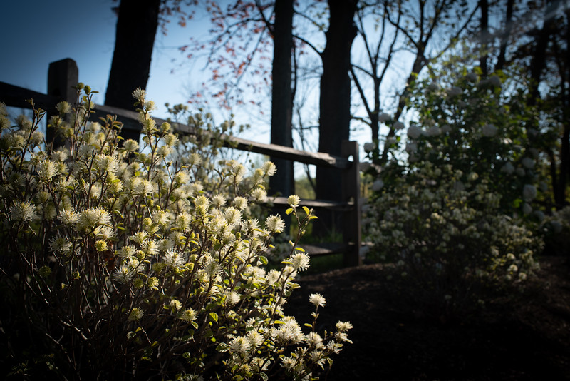 May2020_Landscaping00032