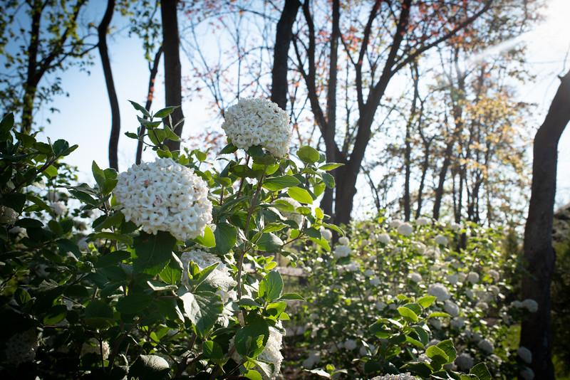 May2020_Landscaping00033