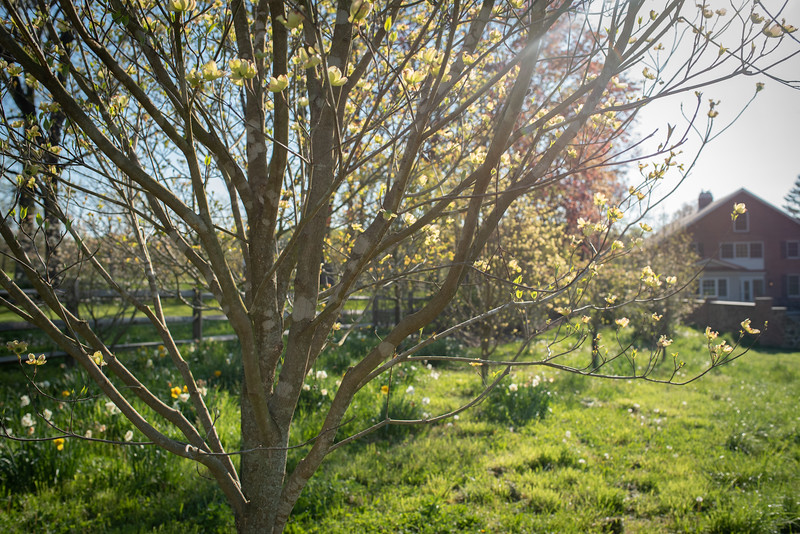 May2020_Landscaping00038
