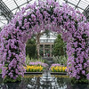 Orchid arch