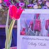 New Tulip created for Philadelphia