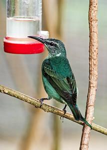 Bird, Costa Rica Biome, 2018.