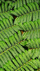 Leaves, Costa Rica Biome, 2018.