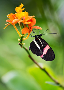 Butterfly, Costa Rica Biome, 2018.