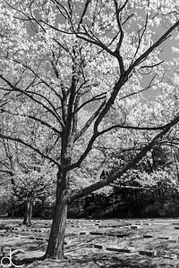 Springtime in Lake View Cemetery, April 2017.