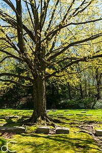 Springtime in Lake View Cemetery, April 2017.