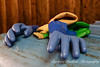 Rubber gloves, bass Harbor lobster dock, Maine