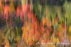 abstract reflection of autumn leaves