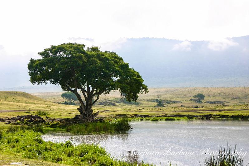 Tree at watering hole, Tanzania