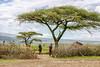 Maasai Village Entry, Tanzania