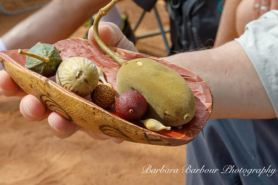 foods used in Aboriginal cooking