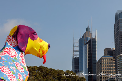 Year of the Dog celebration in Sydney Australia