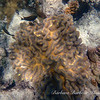 Coral at Great Barrier Reef