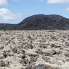 Icelandic Landscape, Lava fields covered by Icelandic moss