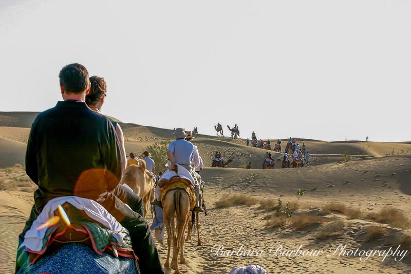 Thar Desert by camel