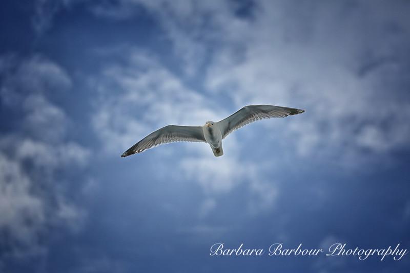 Bird flying over Lake Hovsgol, Mongolia