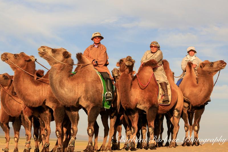 Bactrian Camels, Khongoryn Els, Gobi Desert, Mongolia